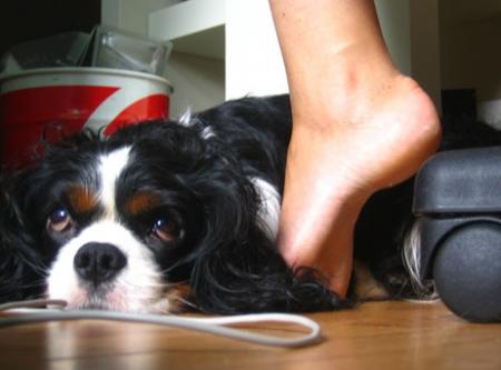 Comment draguer avec un chien ?